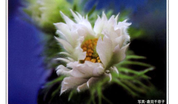 広島花の会写真展